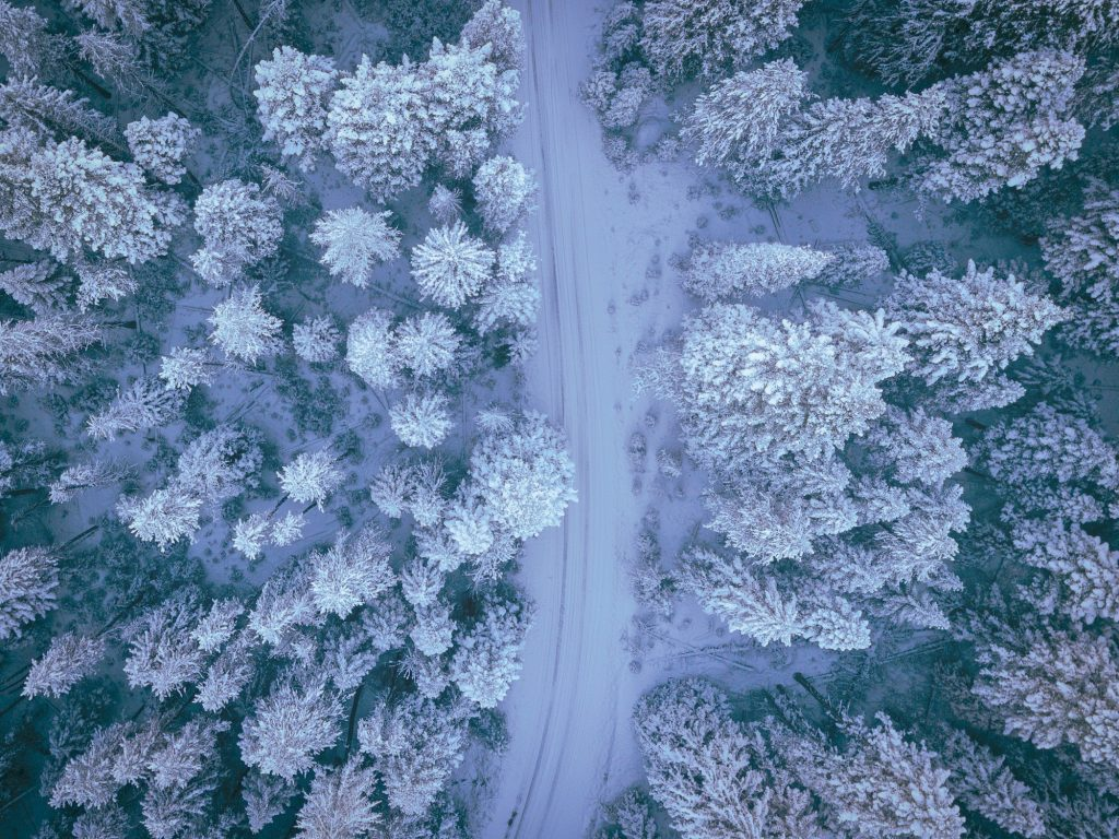 A forest road passes through snowy trees